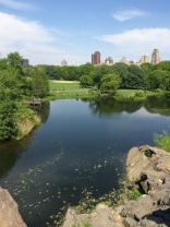 I love Central Park